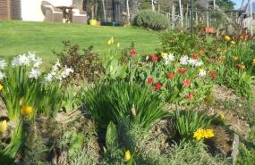 Unser Blumengarten